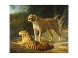 A Tiger and Tigress at the Exeter 'Change Menagerie in 1808 Giclee Print by Jacques-Laurent		 Agasse