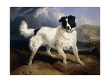 A Portrait of Neptune Prints by Edwin Henry Landseer