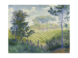 Vineyards Under the Pines Prints by Paul Ranson