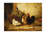 Poultry and Pigeons in an Interior Premium Giclee Print by Walter		 Hunt