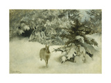 A Hare in the Snow Giclee Print by Bruno		 Liljefors