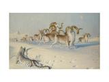 A Snow Leopard Stalking Ovis Poli Prints by Joseph Wolf