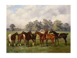 A Group of Polo Ponies, Dainty, Gold, Redskin, Miss Edge, and Piper Posters by Henry Frederick		 Lucas-Lucas