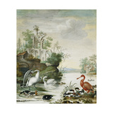 Swans, a Spoonbill, a Mallard, a Wigeon and Other Ducks on a River Below a Ruin Giclee Print by Herman		 Henstenburgh