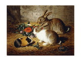 Escaped: Two Rabbits and Guinea Pig Premium Giclee Print by Alfred R.		 Barber