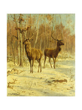 Two Stags in a Clearing in Winter Art by Rosa		 Bonheur