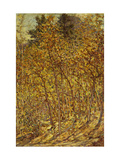 Autumn Sunlight Giclee Print by Robert		 Reid