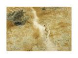 A Winter-Hare in a Landscape Reproduction procédé giclée par Bruno Liljefors