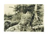 Berguv (Eagle Owl) Bubo Bubo Posters par Bruno Liljefors