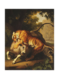 A Tiger attacking a Bull Giclee Print by Peter Wenzel