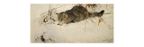 A Cat Stalking a Mouse in the Snow Premium Giclee Print by Bruno		 Liljefors