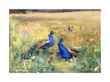 Peacocks in a Field Premium Giclee Print by Mildred Anne		 Butler