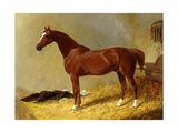 A Bay Racehorse in a Stall Poster by John Frederick Herring I
