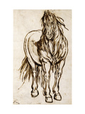Study of a Horse Art by Jacques		 Callot
