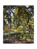 Garden in Godrammstein with a Twisted Tree and Pond Giclee Print by Max		 Slevogt