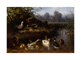 Ducks and Ducklings in a Stream Prints by Carl		 Jutz