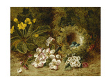 Apple Blossoms, a Primrose and Birds Nest on a Mossy Bank Giclee Print by Clare Oliver