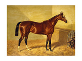 Orlando, a Bay Racehorse in a Loosebox Giclee Print by John Frederick Herring I