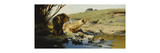 A Lion and Lioness at a Stream Premium Giclee Print by Wilhelm Kuhnert