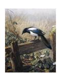 A Magpie Observing Fieldmice Giclée-trykk av Johan Gerard Keulemans