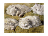 Studies of a Long-haired White Cat Premium Giclee Print by Henriette		 Ronner-Knip