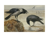 A Hooded Crow and a Carrion Crow Giclee Print by Archibald		 Thorburn