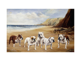 Bulldogs on a Beach Giclee Print by R.		 Ward Binks
