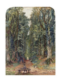 The Avenue at Ampthill Prints by Rudge Bradford