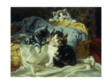 Playful Kittens Premium Giclee Print by Julius		 Adam