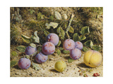 Still Life with Plums, a Peach and Rosehips Poster by William		 Hough