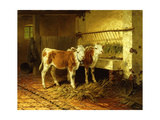 Two Calves in a Barn Premium Giclee Print by Walter		 Hunt