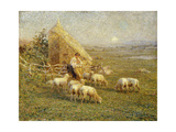 A Shepherd and his Sheep in a Meadow Prints by Tom		 Griffiths