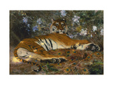 Tiger from Annam; Tigre de l'Annam Giclee Print by Gustave		 Surand