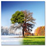 4 Seasons Kunst af Adam Brzuszek