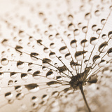 After The Rain - Sanat