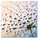 After The Rain Kunst
