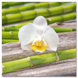 Beauty Of The Bamboo Field Posters por Uwe Merkel