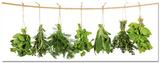 Hanging Herbs Kunst
