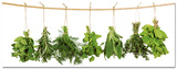 Hanging Herbs - Art Print