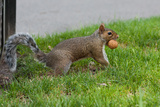 Gray Squirrel Gets His Nut Plastic Sign Plastic Sign