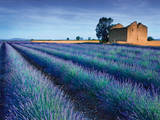 Stone Barn in Lavender Field  Prints by Simon Kayne