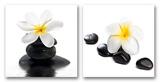 Zen Flowers (set of 2 panels) Poster