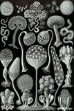 Mycetozoa Nature Plastic Sign by Ernst Haeckel Plastic Sign