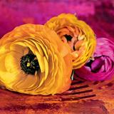 Orange Meets Purple Affiches