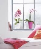 Orchid Window Raamsticker