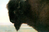 Albert Bierstadt Buffalo Head Plastic Sign Wall Sign