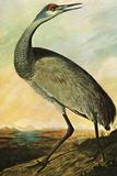 Audubon Sandhill Crane Bird Plastic Sign Wall Sign by John James Audubon