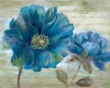 Blue Poppy Poem I Poster by  Nan