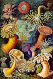 Actiniae Nature Plastic Sign by Ernst Haeckel Plastic Sign
