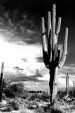 Arizona Desert Archival Photo Poster Photo